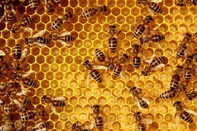 Néonicotinoïdes: « On a des produits qui restent actifs sur les pollinisateurs » explique le patron de l'Agence nationale de sécurité sanitaire