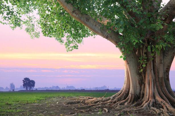 Lettre à Mr Guy Geoffroy – Maire de Combs La Ville & Président des Eco Maires – suite à l'adoption de la déclaration des droits de l'arbre