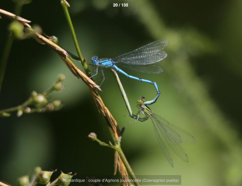 """Bouffée d'air : visitez la galerie photos """"Le monde incroyable des insectes"""""""