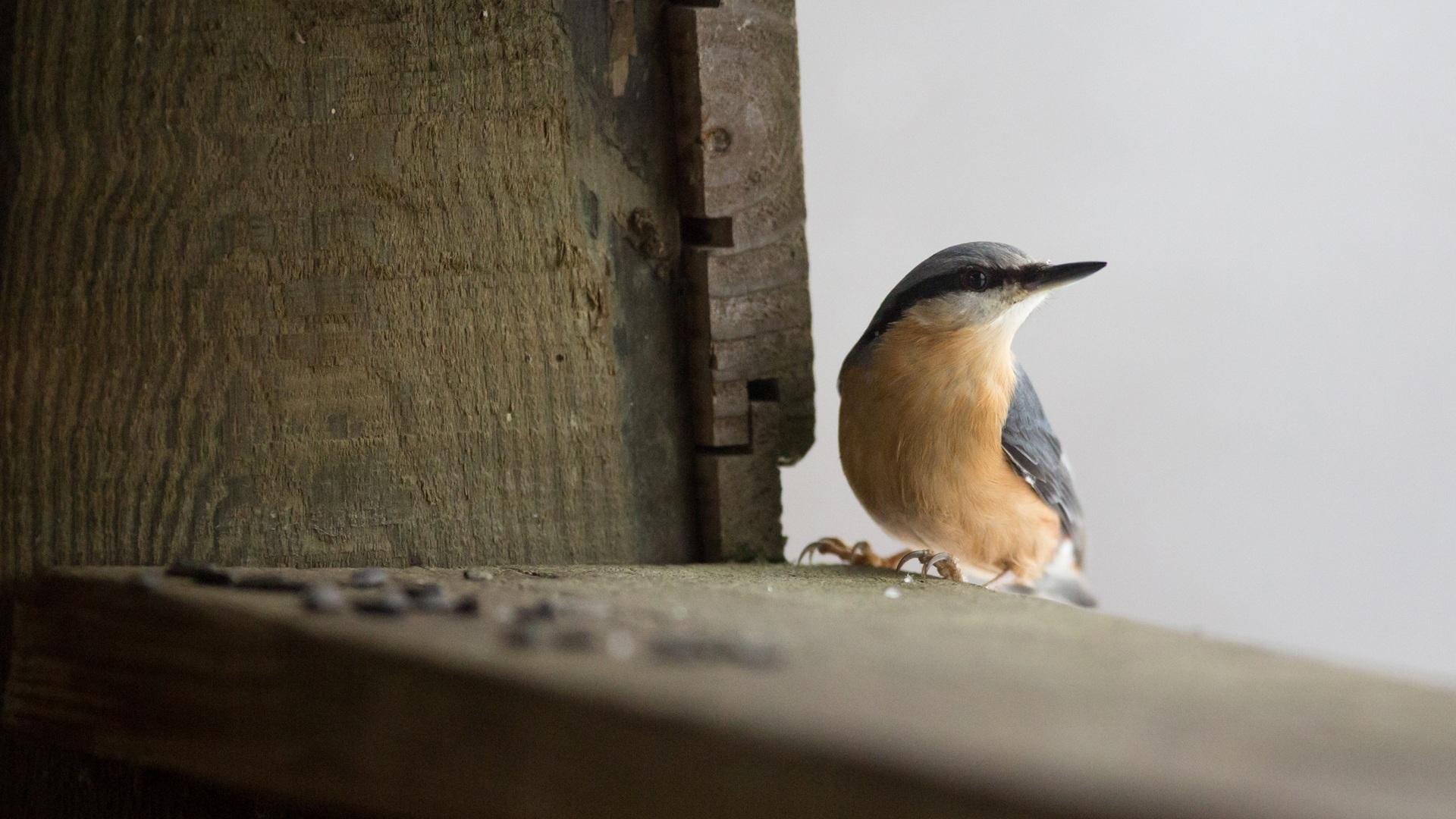 Nourrissage des oiseaux, quand et pourquoi arrêter ?