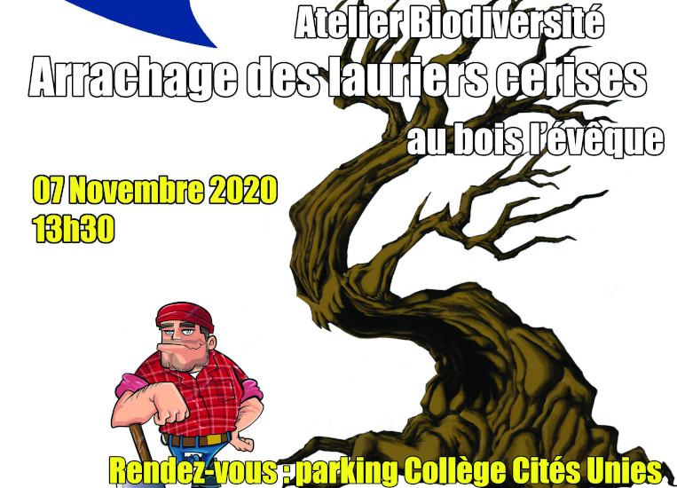 Arrachage des lauriers cerises du Bois l'évêque le 07/11/2020